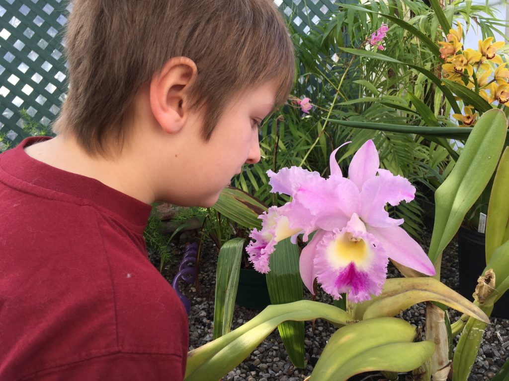 Stopping to smell the flowers at the Buffalo Botanical Gardens