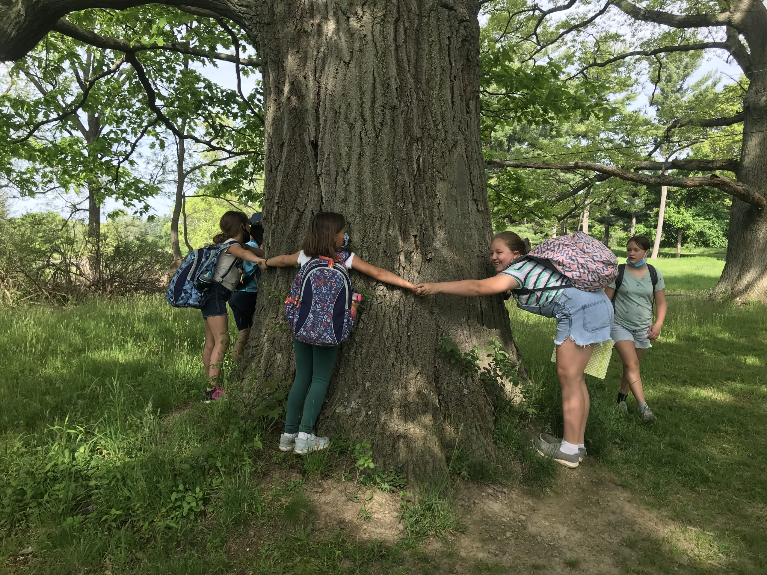 A mighty oak at Knox Farm State Park